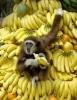 Бананы: полезные свойства и противопоказания